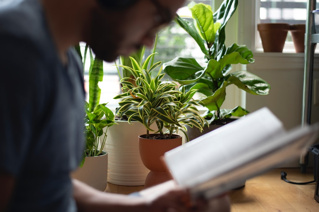 Reading By My Plants.  - unsplash