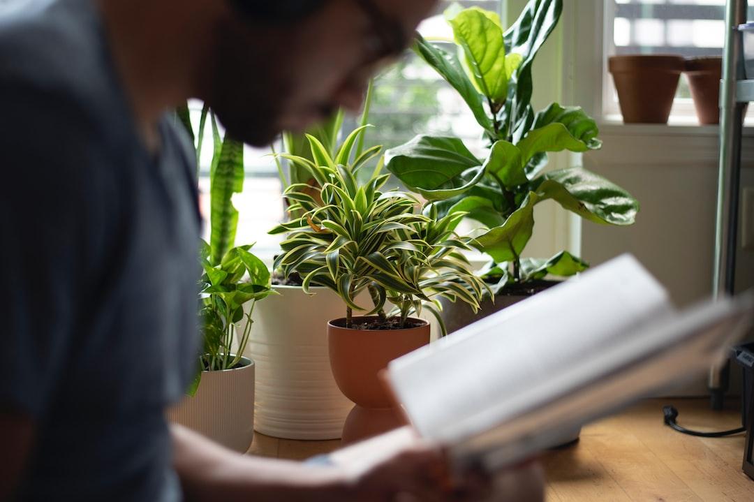 Reading By My Plants.  - unsplash
