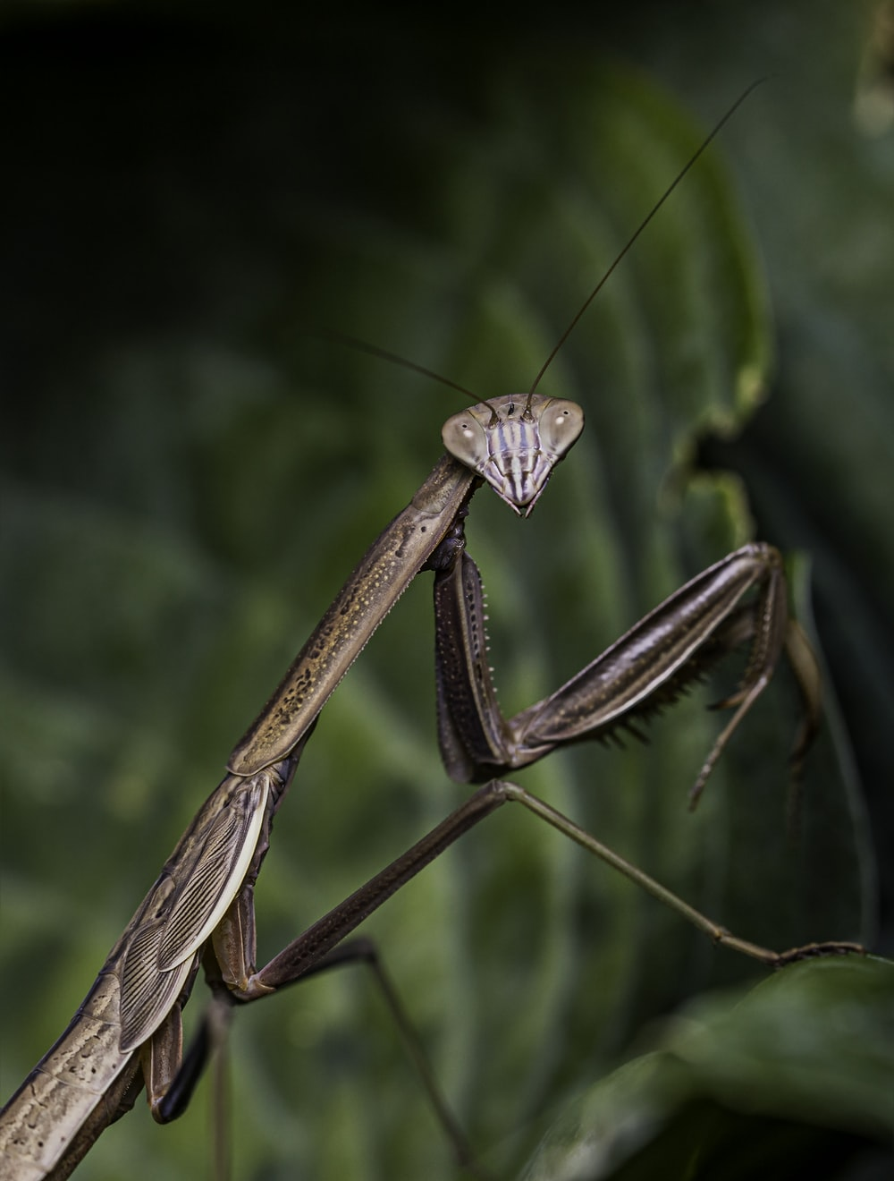 brown praying mantis on green leaf in close up photography during daytime