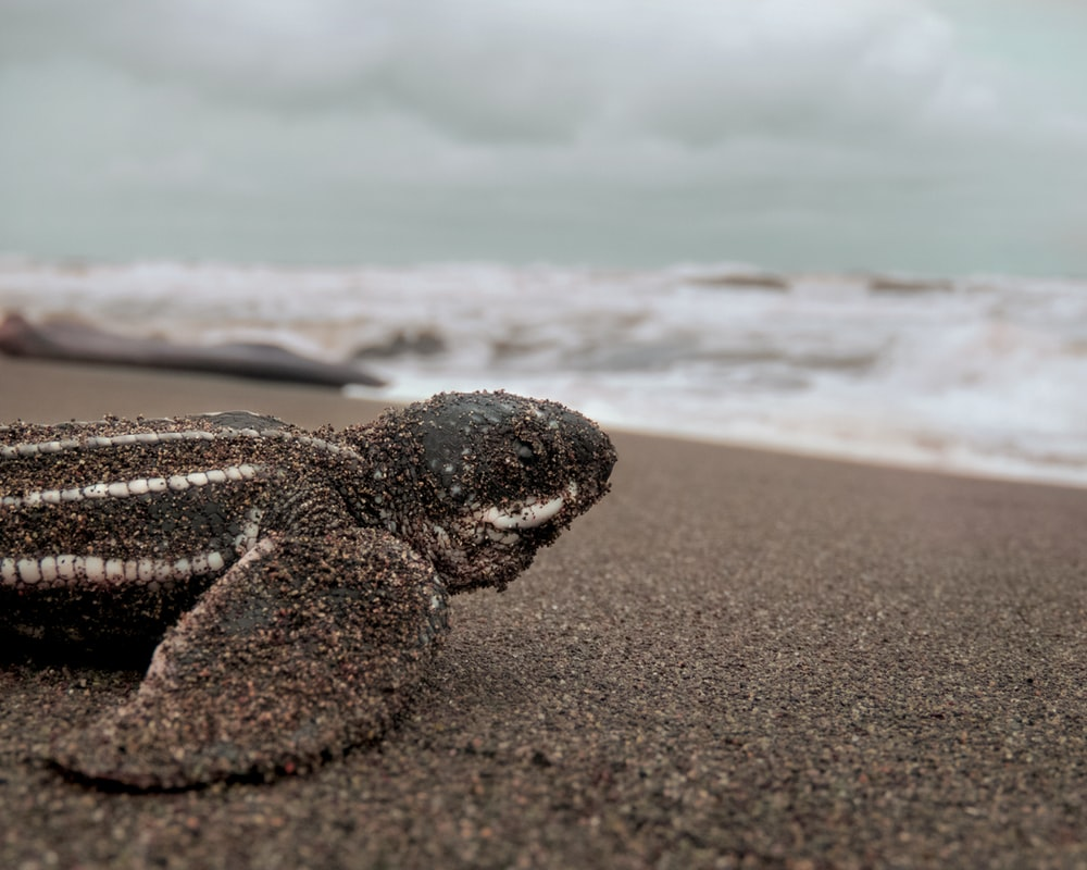 black and brown turtle on beach shore during daytime