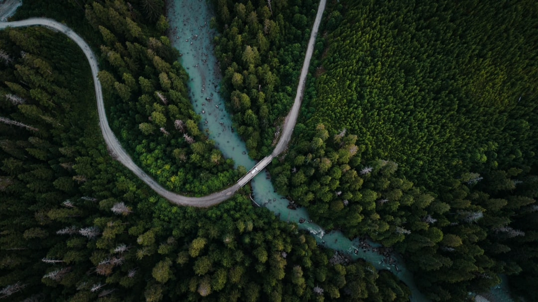 Aerial View of Green Trees and River - unsplash