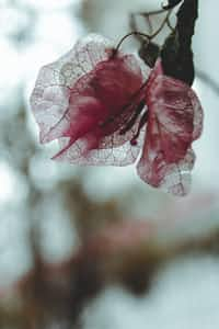 BLOODSTREAM poem stories