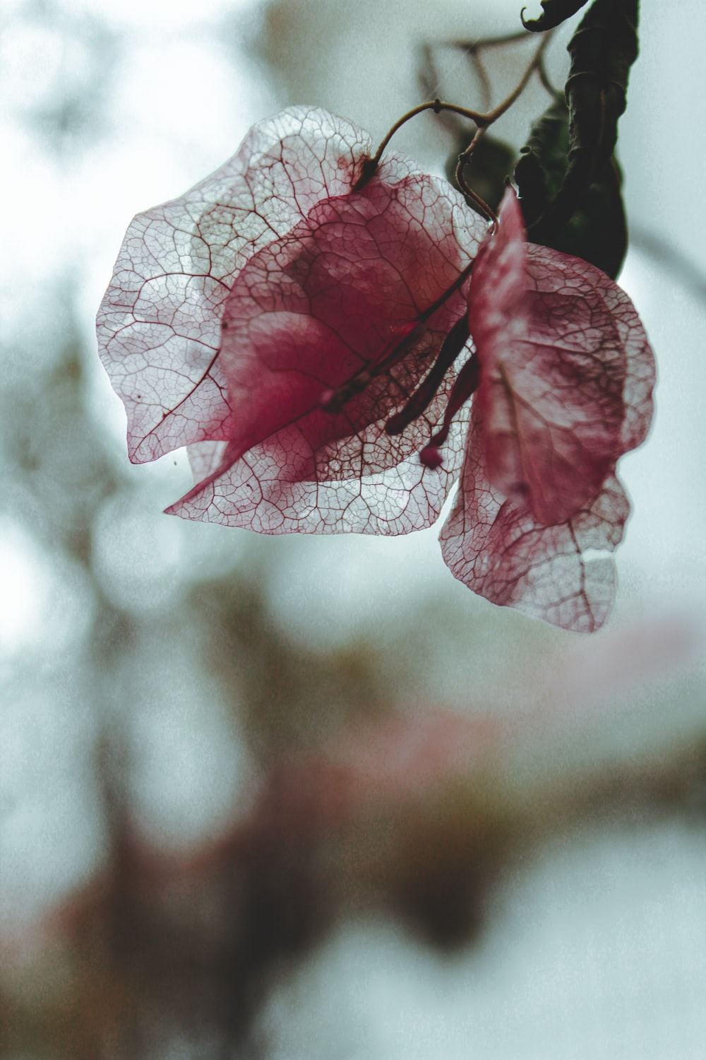 purple leaf in close up photography