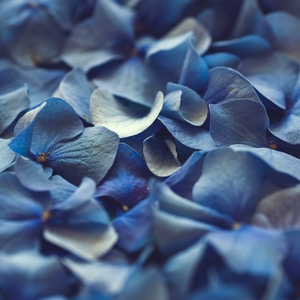blue flower petals in close up photography