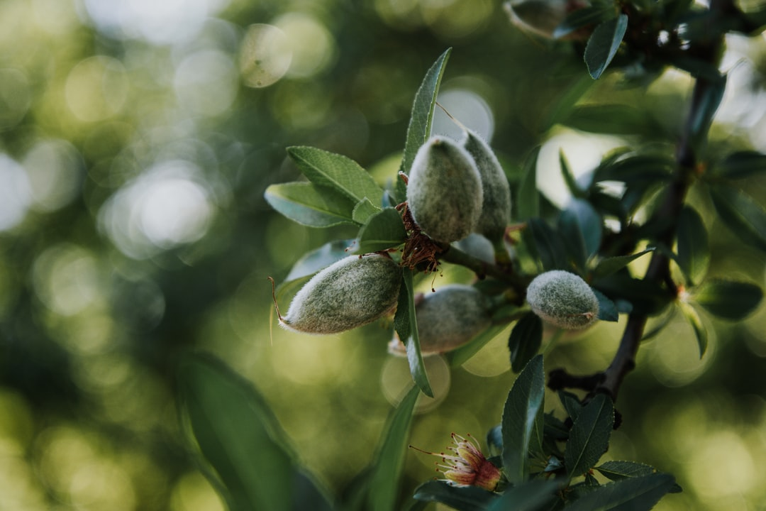 almonds in march/spring 2020