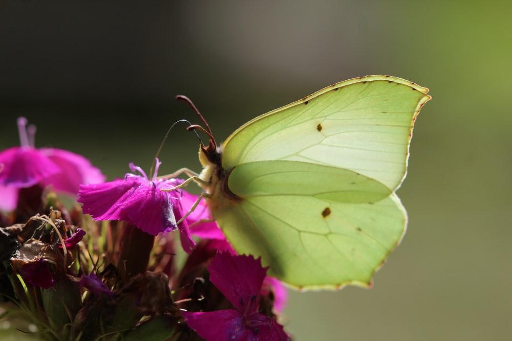green butterfly perched on purple flower in close up photography during daytime