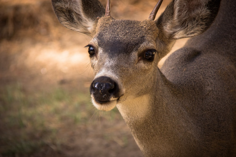 brown deer in close up photography during daytime