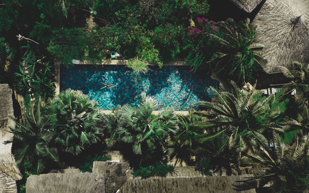 Green Plant Near Body of Water During Daytime - unsplash