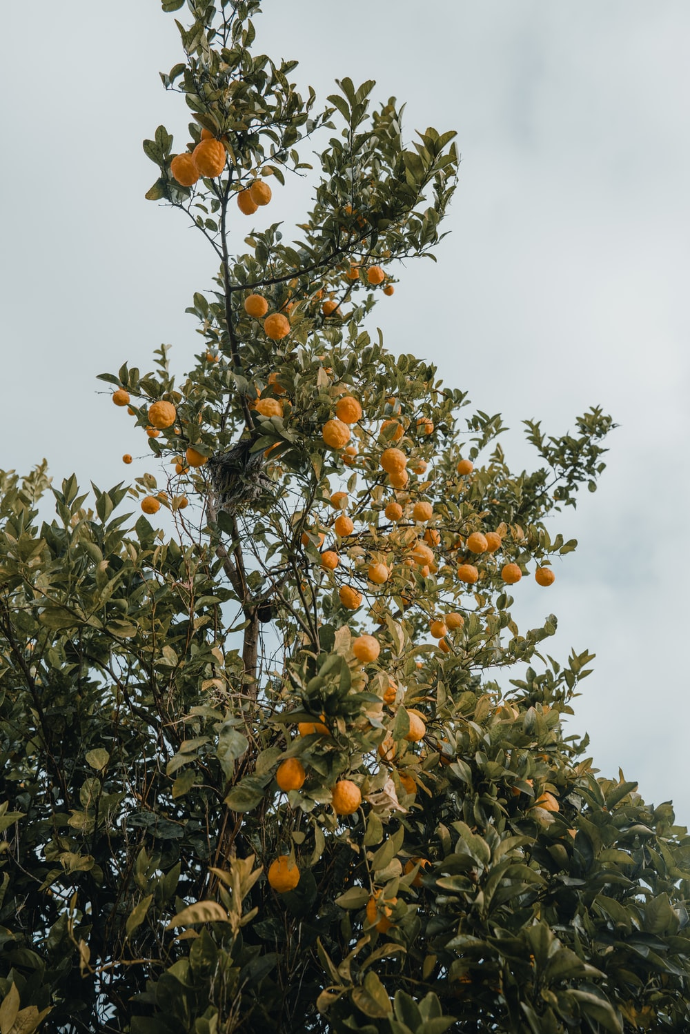 orange fruit tree during daytime