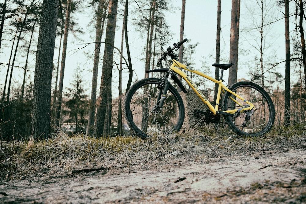 yellow and black mountain bike near trees during daytime