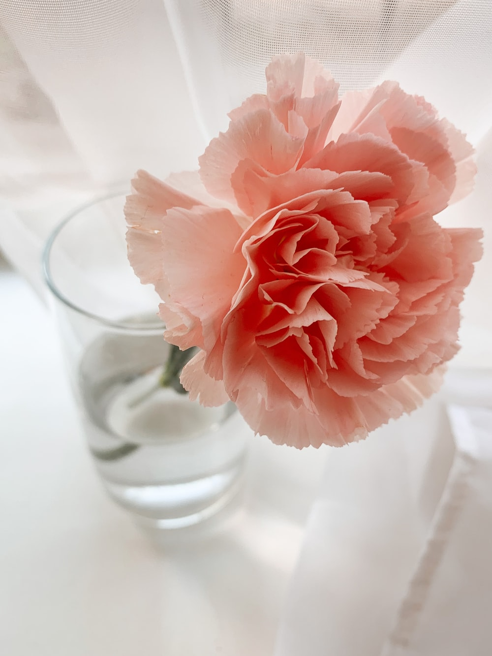 pink flower in clear glass vase