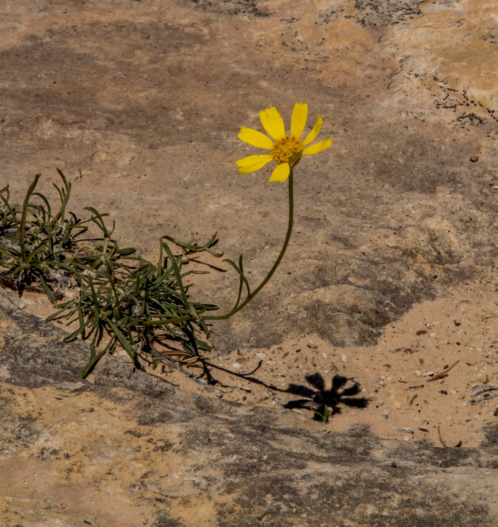 yellow flower on brown sand