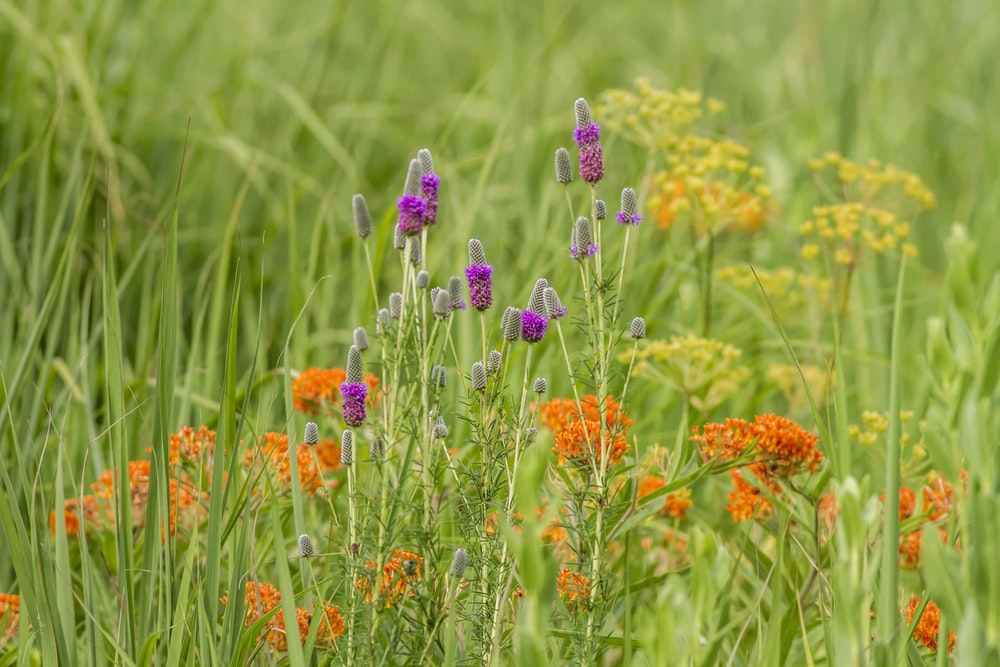 purple and orange flowers in green grass field