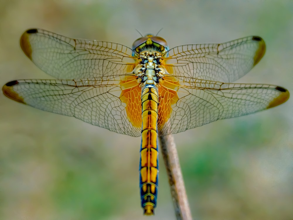 yellow and black dragonfly on brown stem in close up photography during daytime