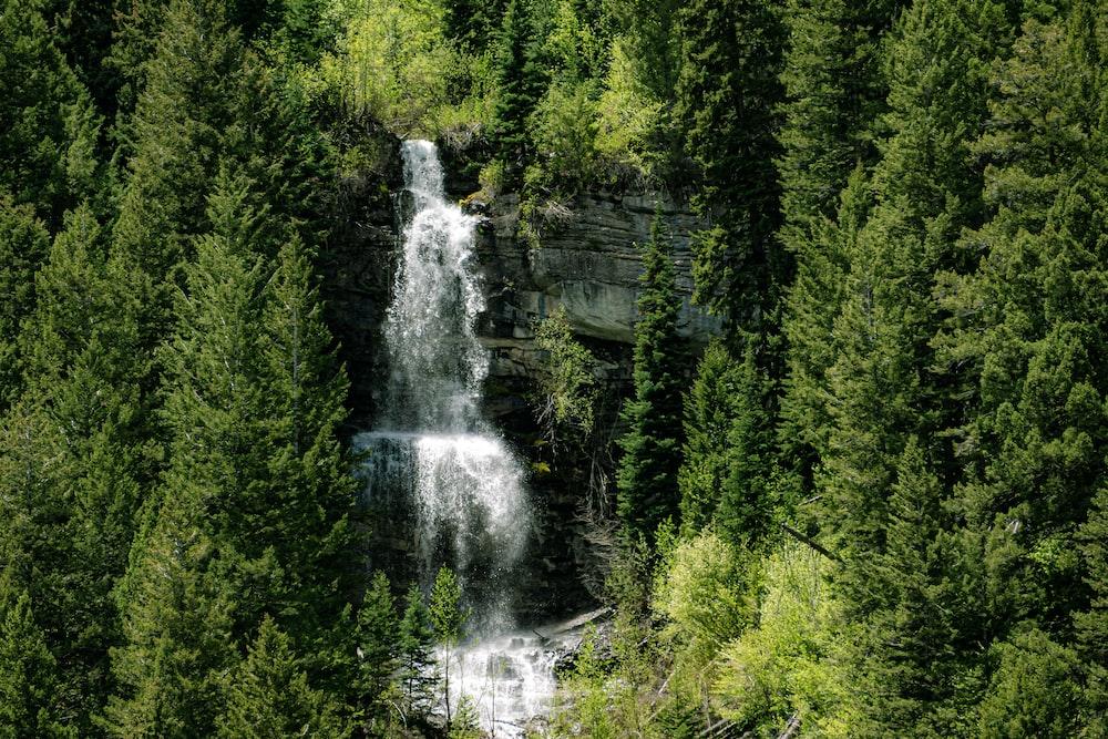 green pine trees near waterfalls during daytime