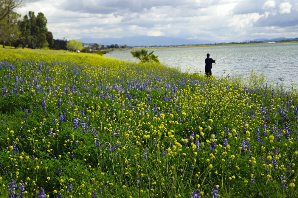 person in black jacket walking on yellow flower field during daytime