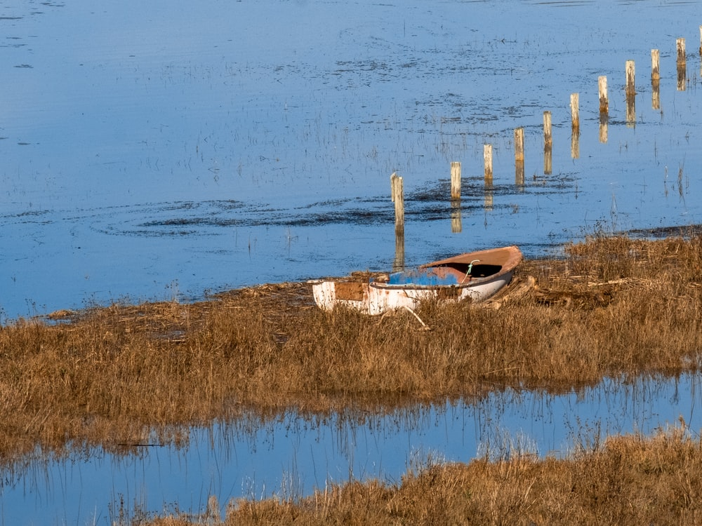 brown wooden boat on brown grass field near body of water during daytime
