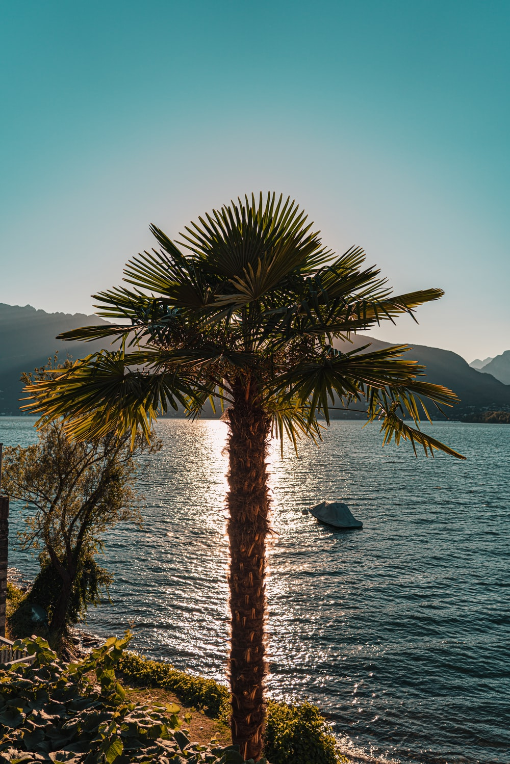 palm tree near body of water during daytime