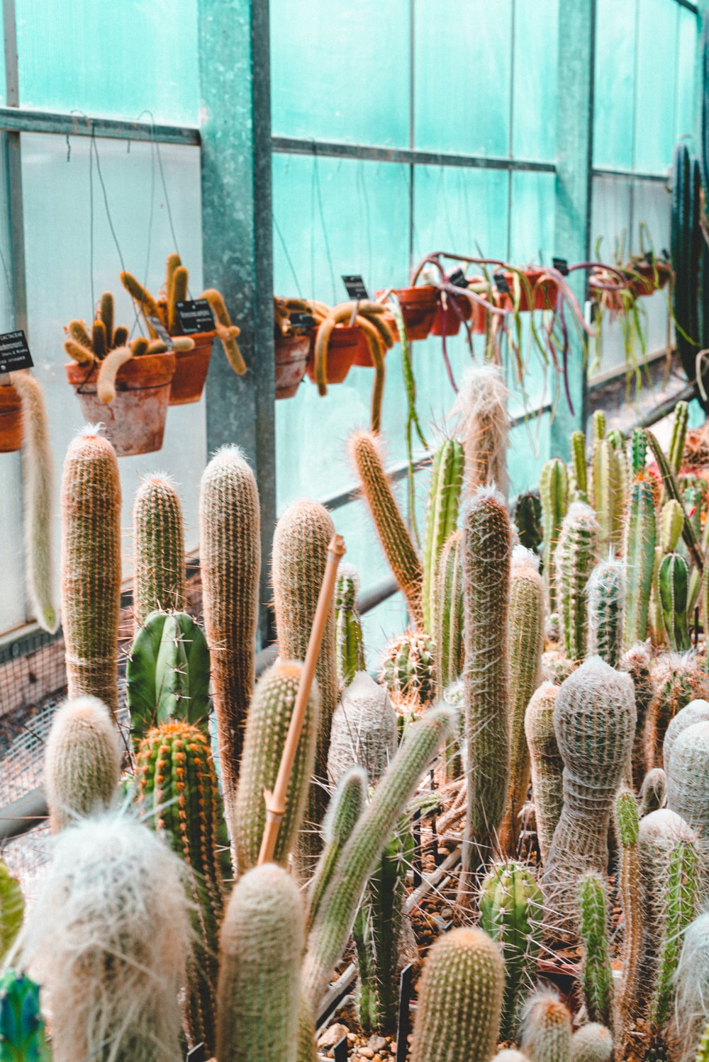 cactus plants on brown wooden wall rack