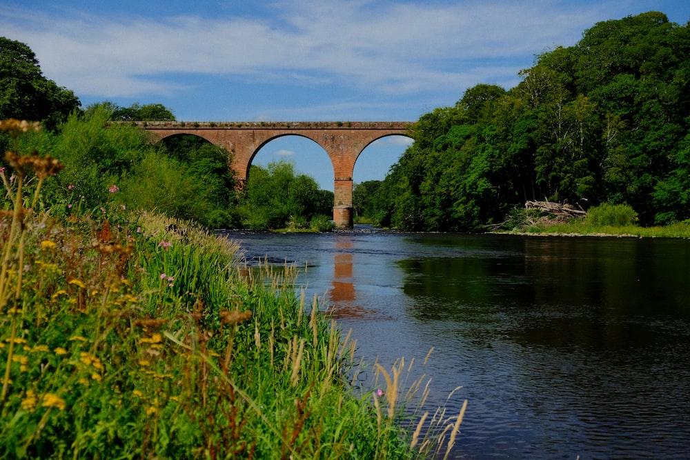 green grass on river under bridge