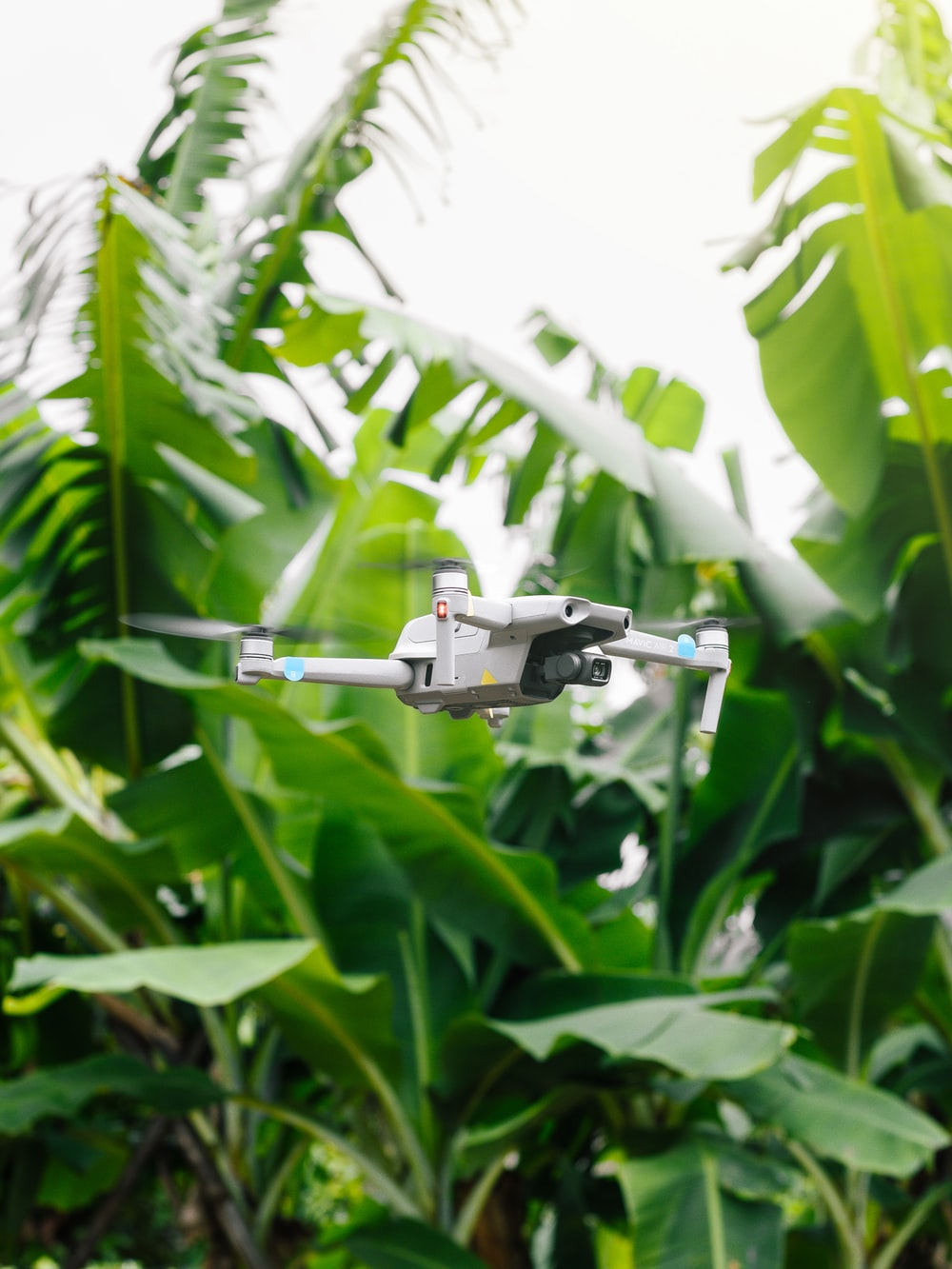 gray and black drone on green plant during daytime