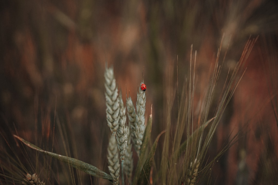 Red Ladybug Perched On Green Plant In Close Up Photography During Daytime - unsplash