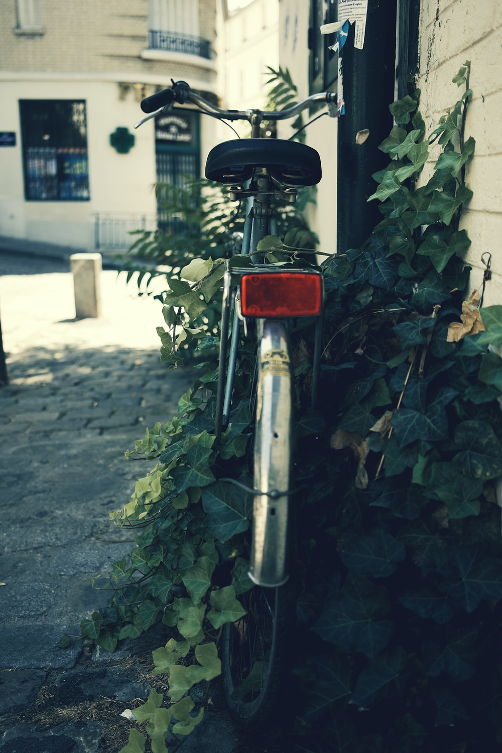 red and gray bicycle near green plants