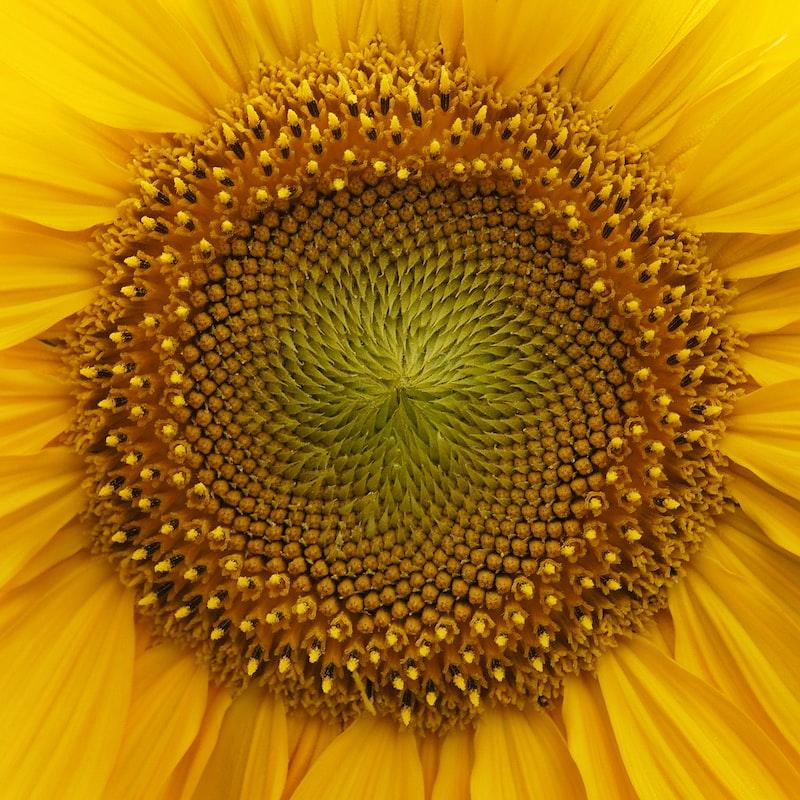 Красивые фото - Страница 4 Photo-1597002755425-294af3078d09?ixlib=rb-1.2