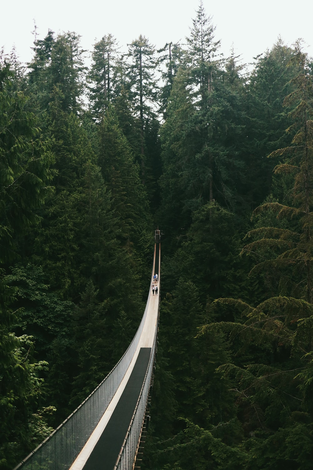 white bridge in the middle of forest