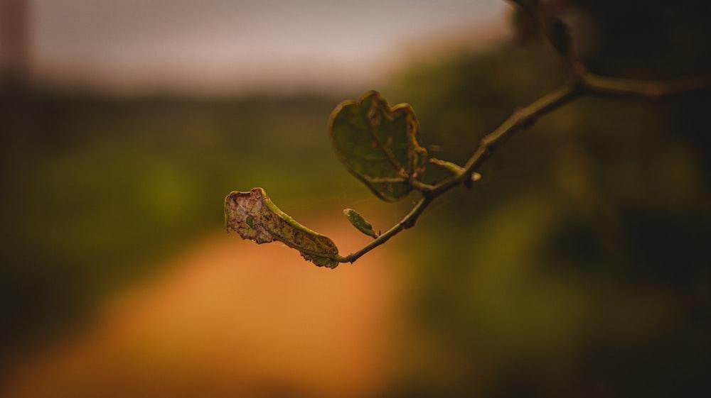 green leaf in macro shot