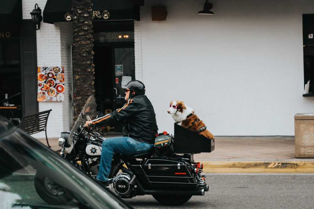 man in blue denim jacket and blue denim jeans riding black motorcycle with white and brown