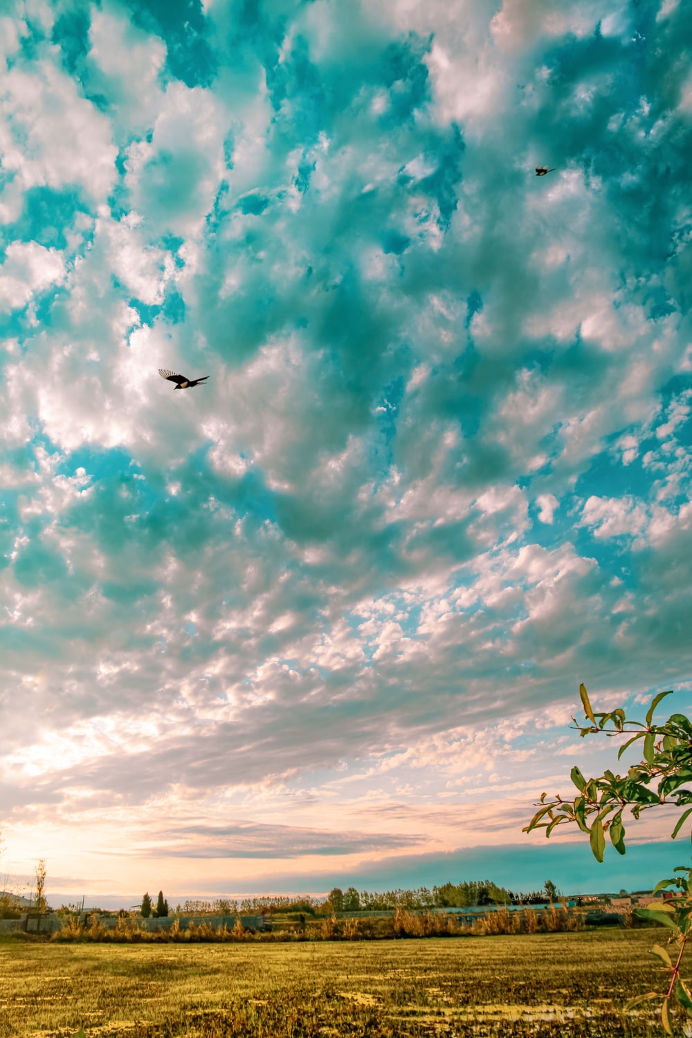 black bird flying over green plants under blue and white cloudy sky during daytime