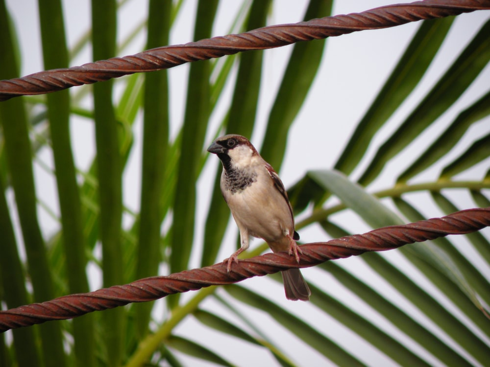 brown and black bird on brown tree branch