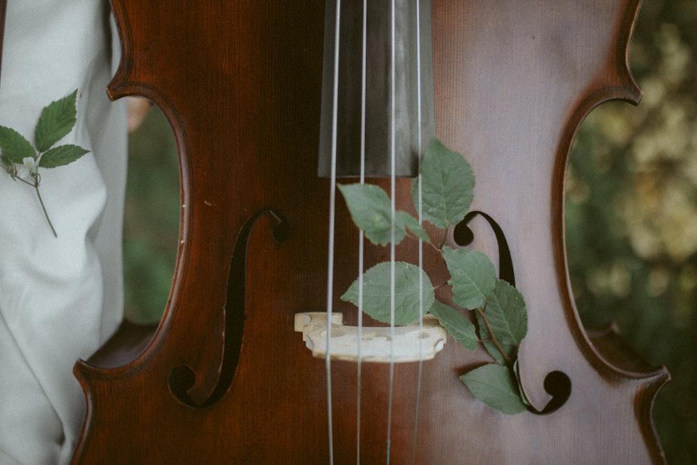green leaves on brown wooden violin