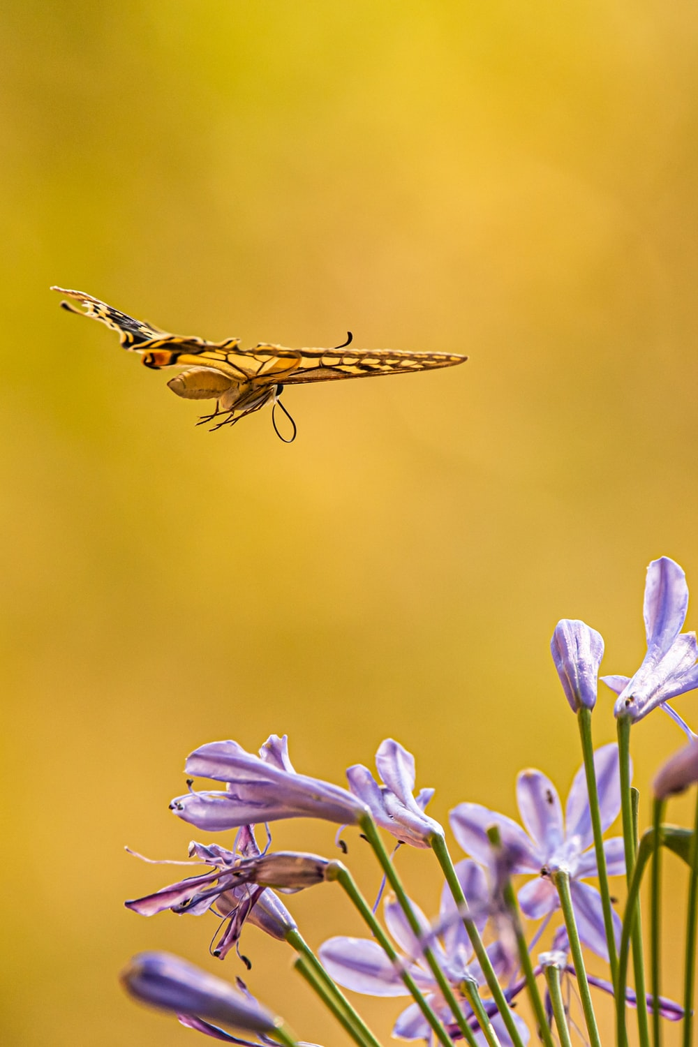 brown and black dragonfly perched on purple flower in close up photography during daytime