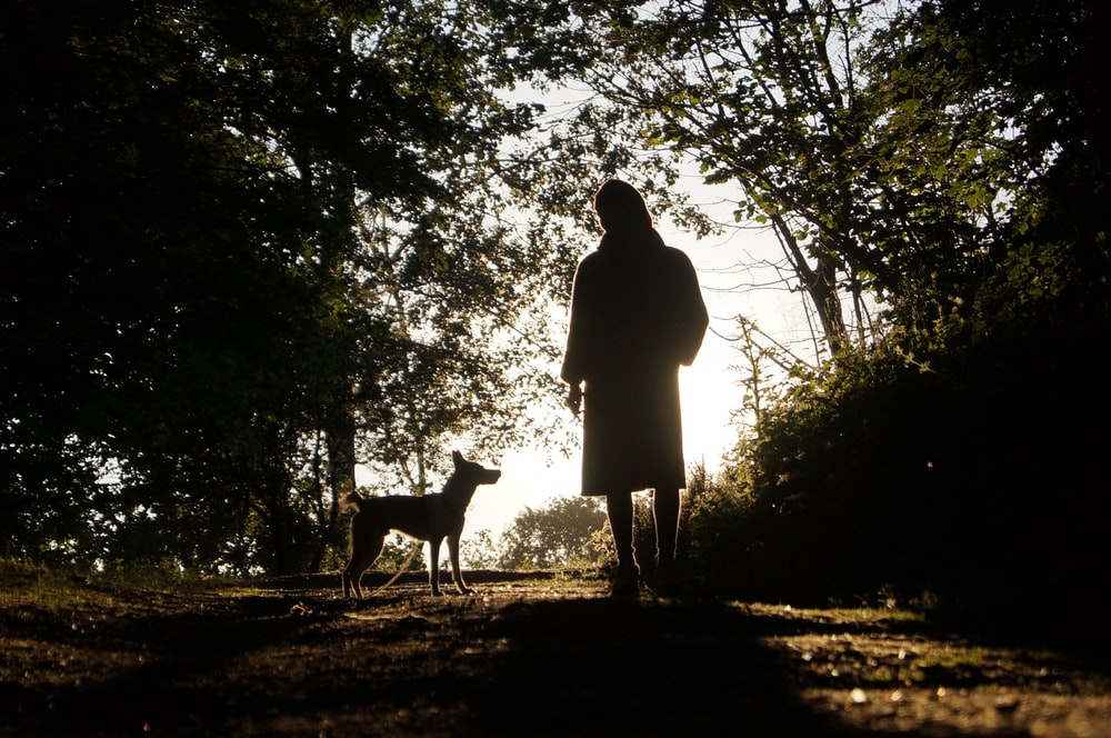 silhouette of woman standing beside dog during daytime