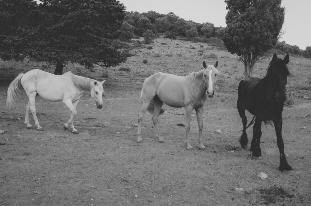 grayscale photo of 2 horses