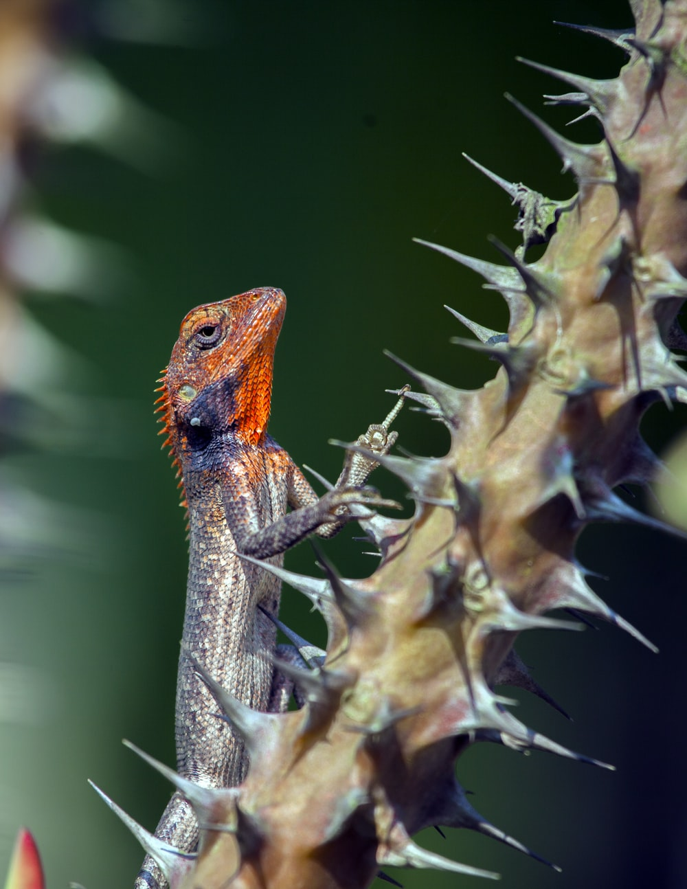 orange and brown lizard on brown dried plant