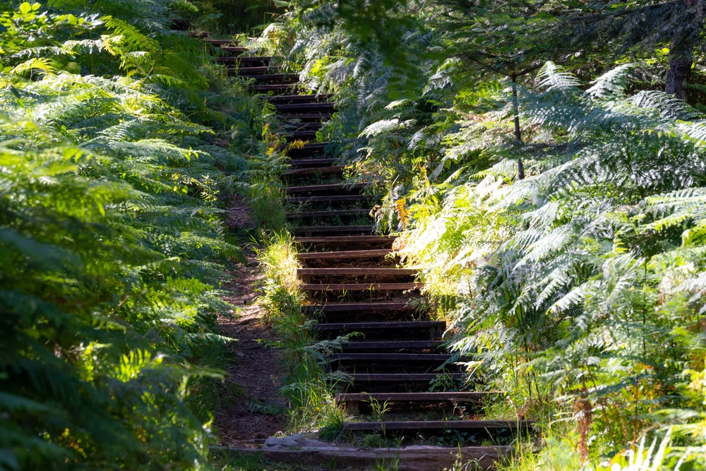 brown wooden stairs in the middle of green trees