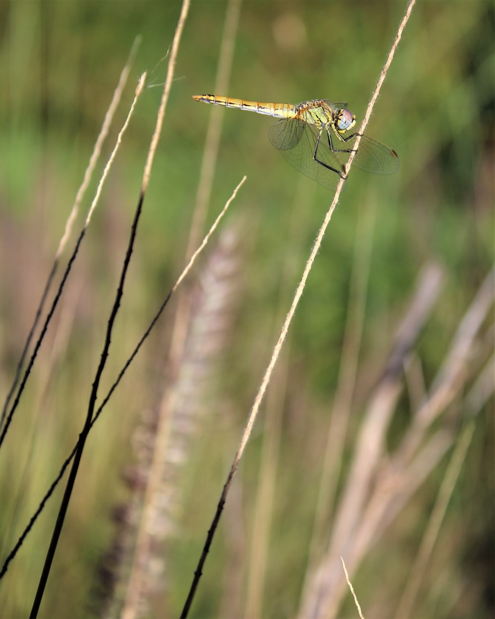 green dragonfly perched on green grass in close up photography during daytime