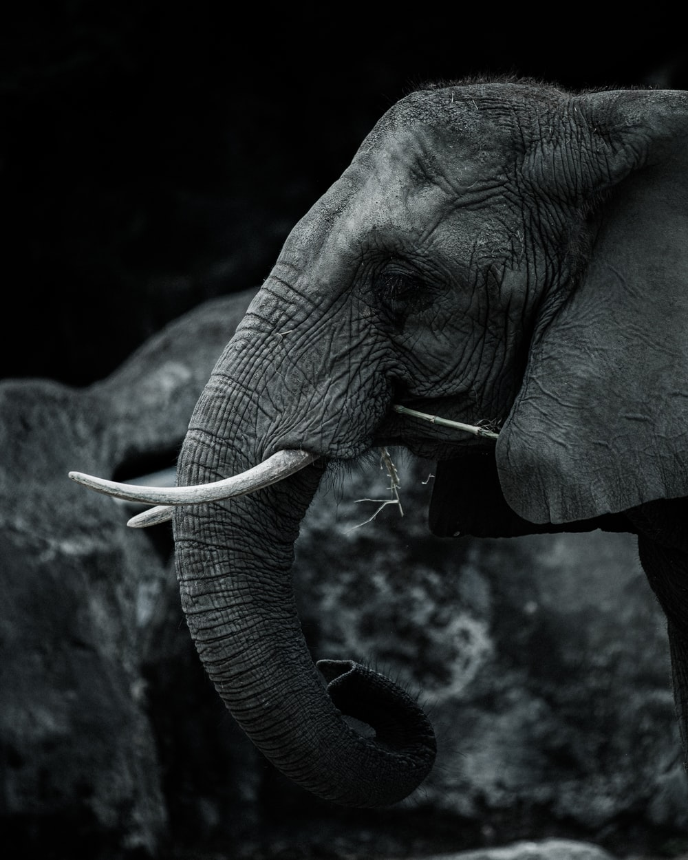 elephant drinking water from a water
