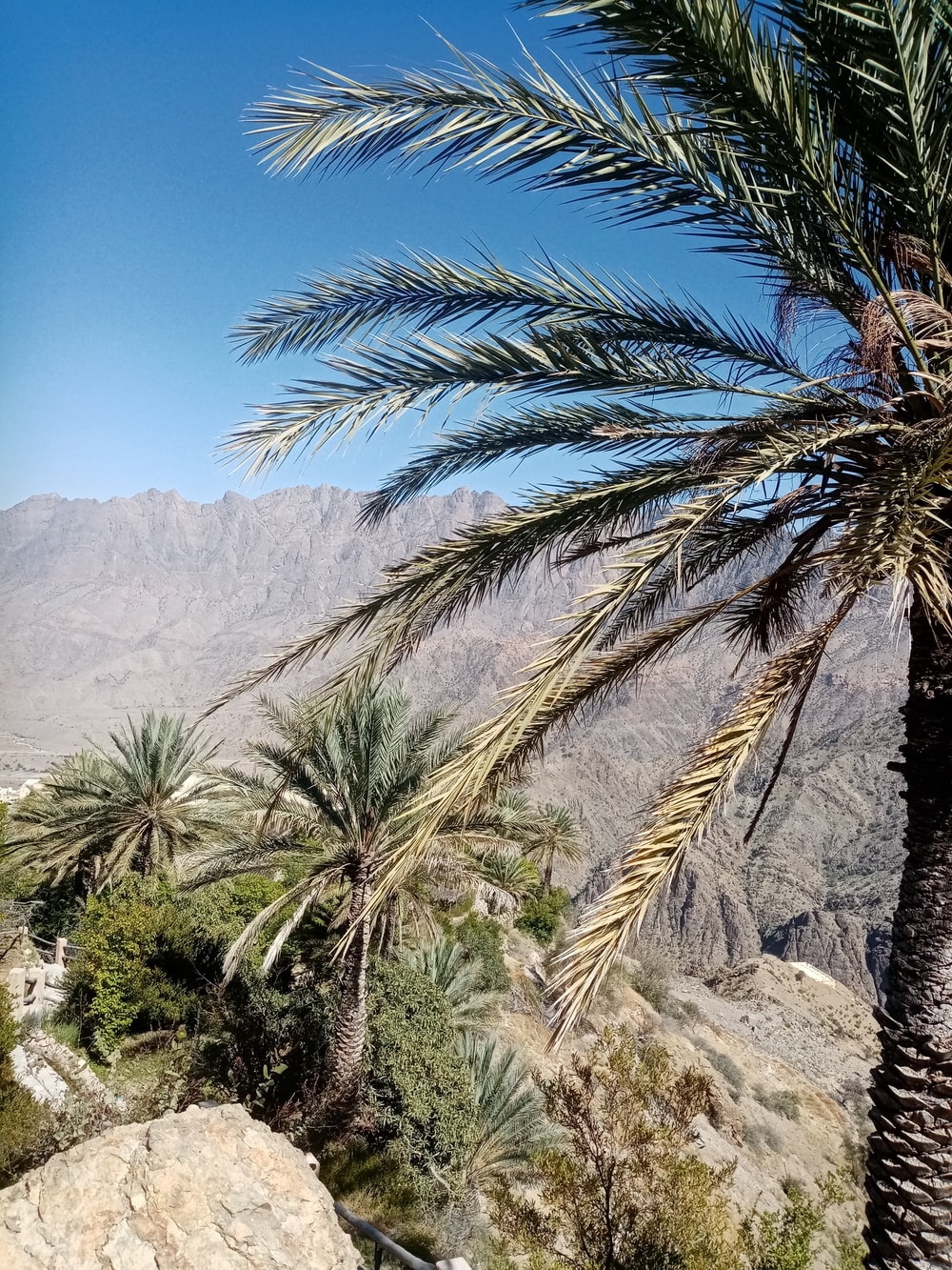 green palm tree near mountain during daytime