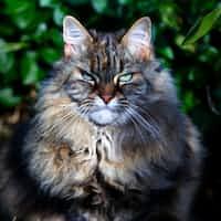Warrior Cats Interviews|Ep.2 wc stories