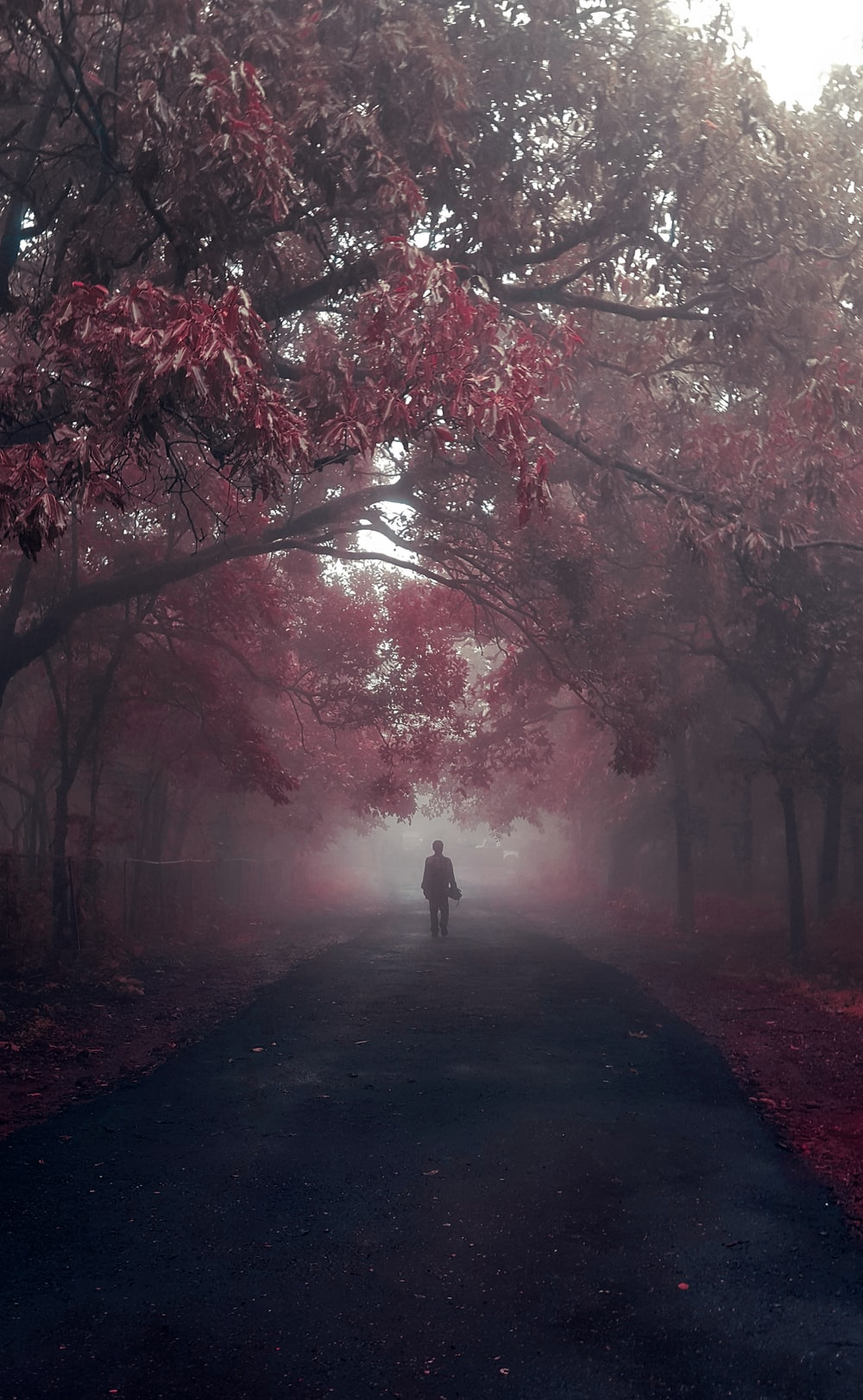 person walking on pathway between trees during daytime