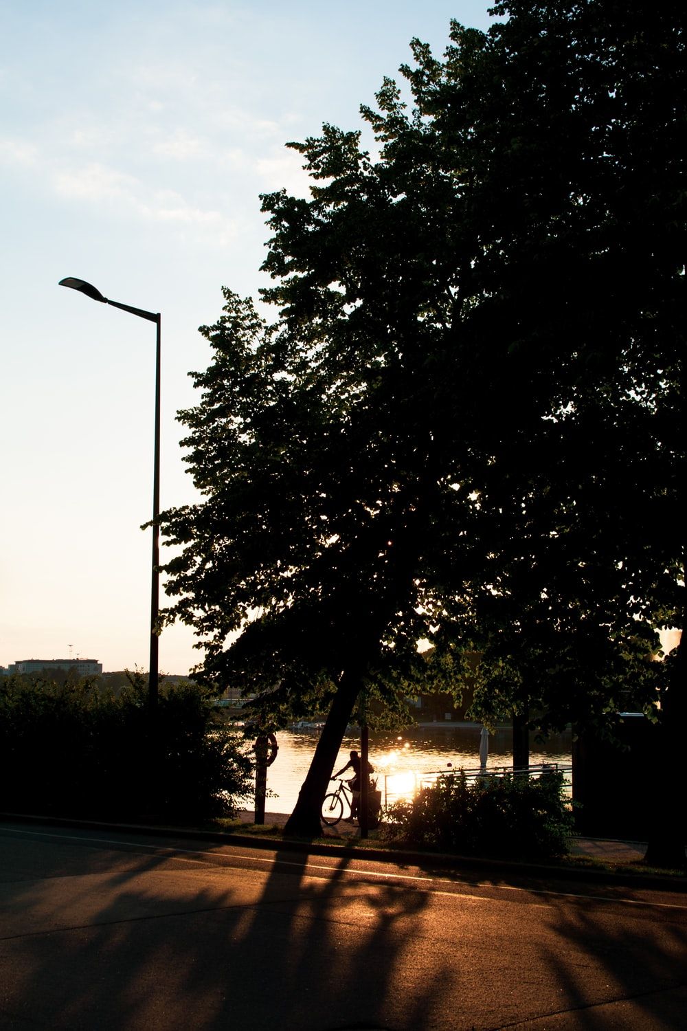 green tree beside road during daytime