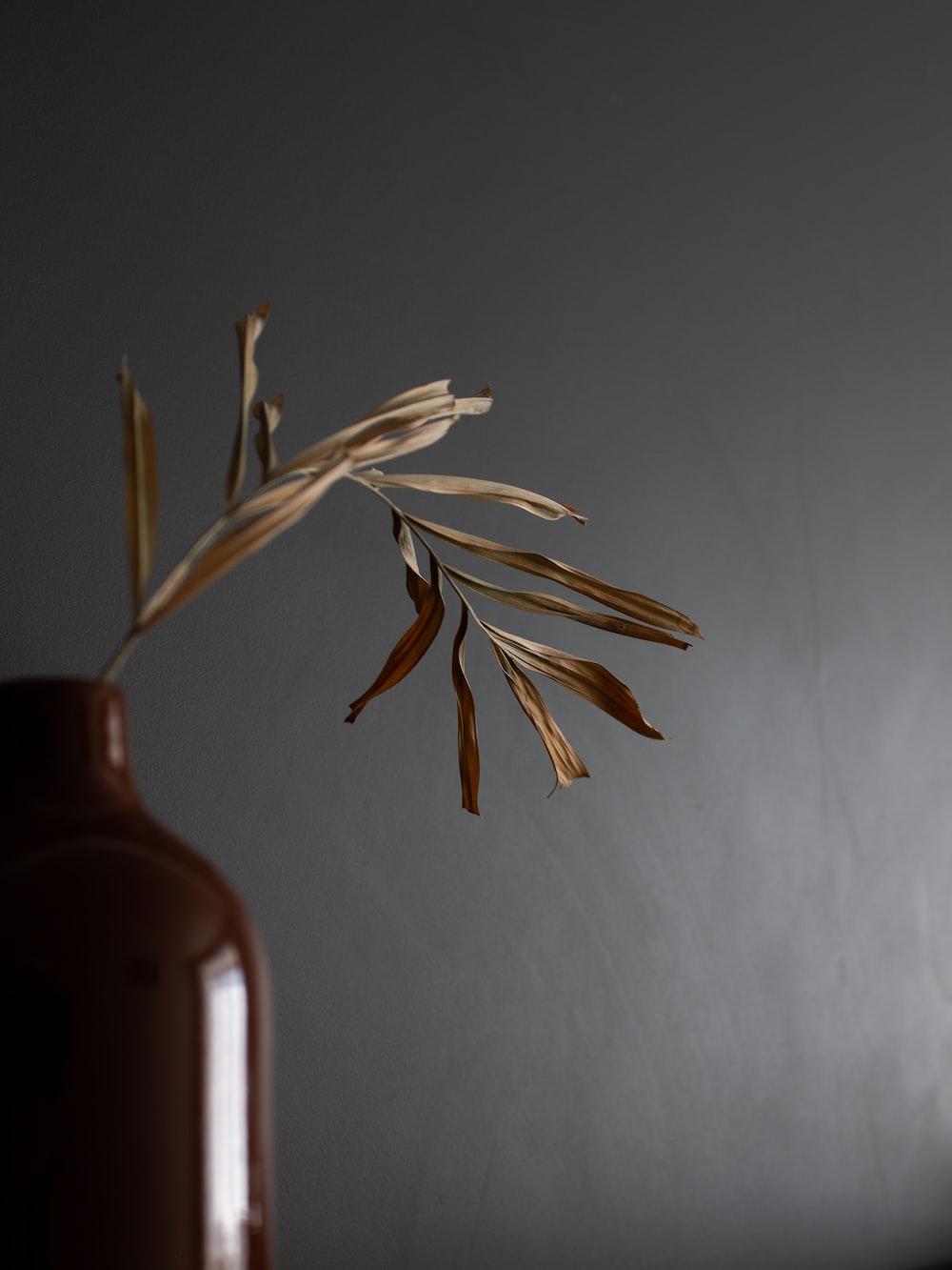 brown plant in brown ceramic vase