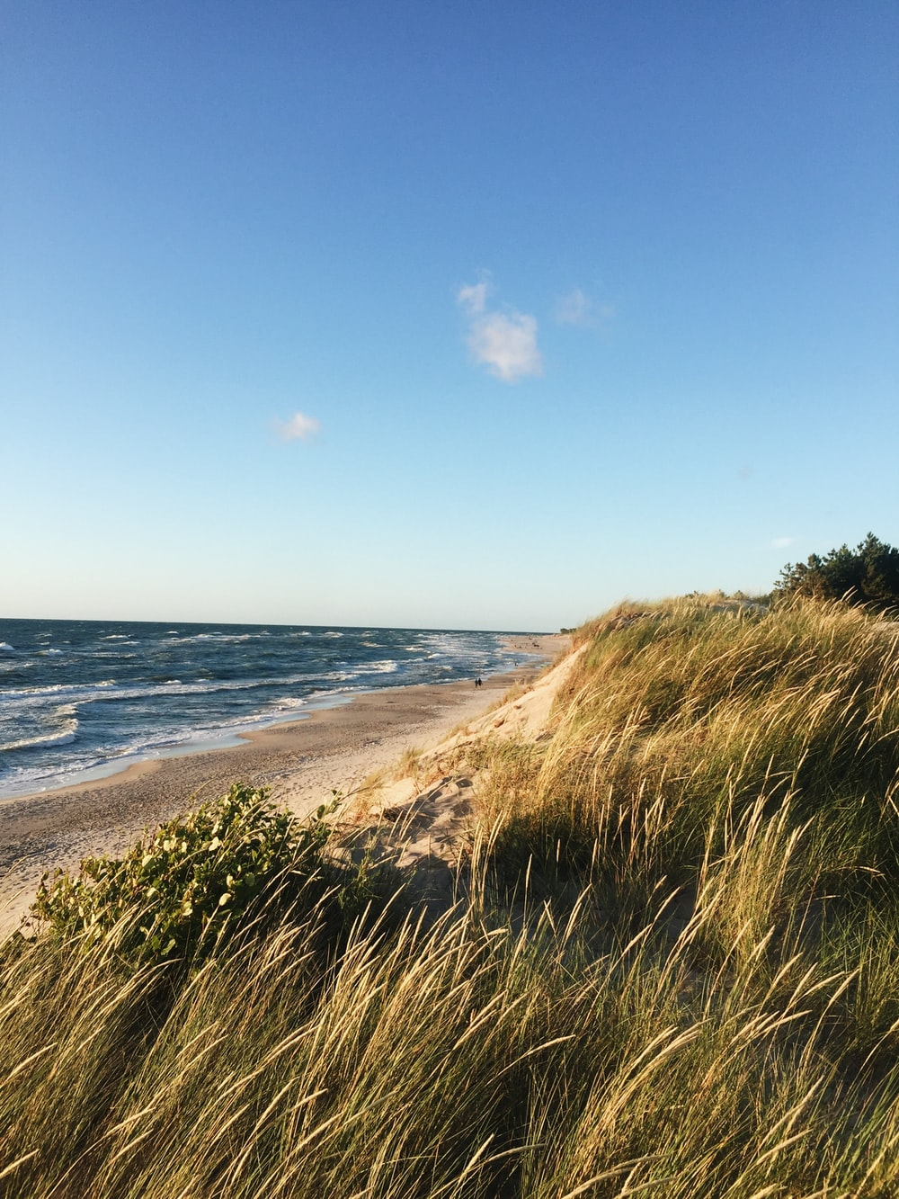 green grass near sea under blue sky during daytime