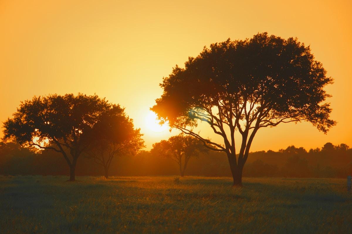 sunsetting in a field in Cibolo, Texas