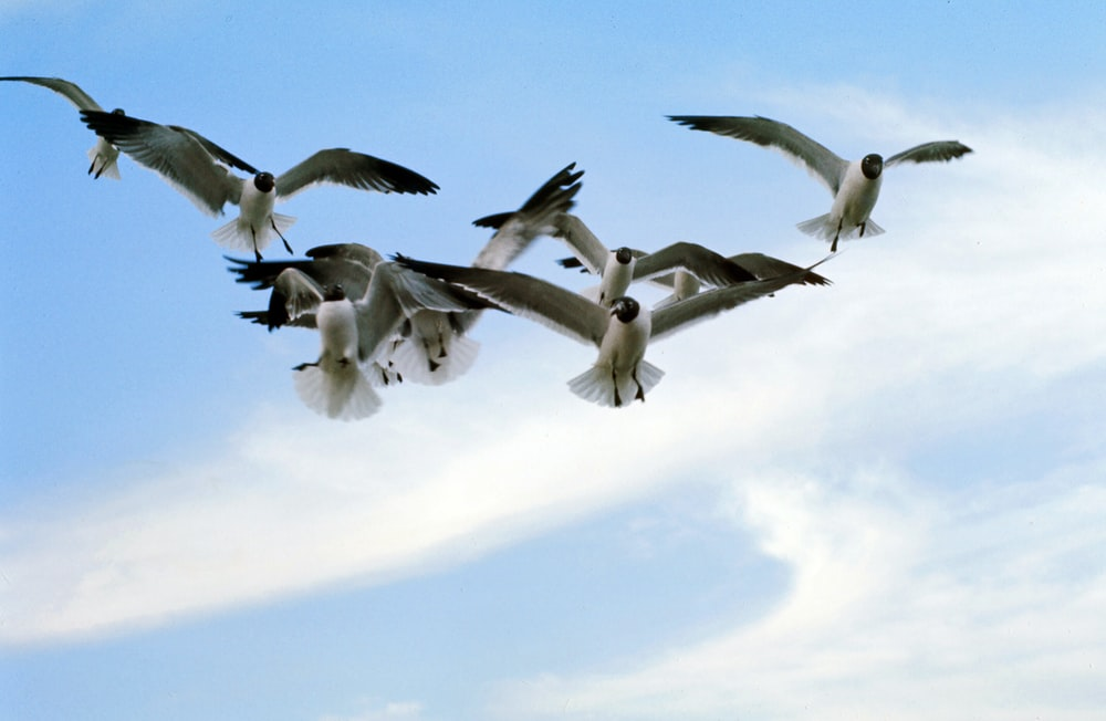 flock of white and black birds flying under white clouds during daytime