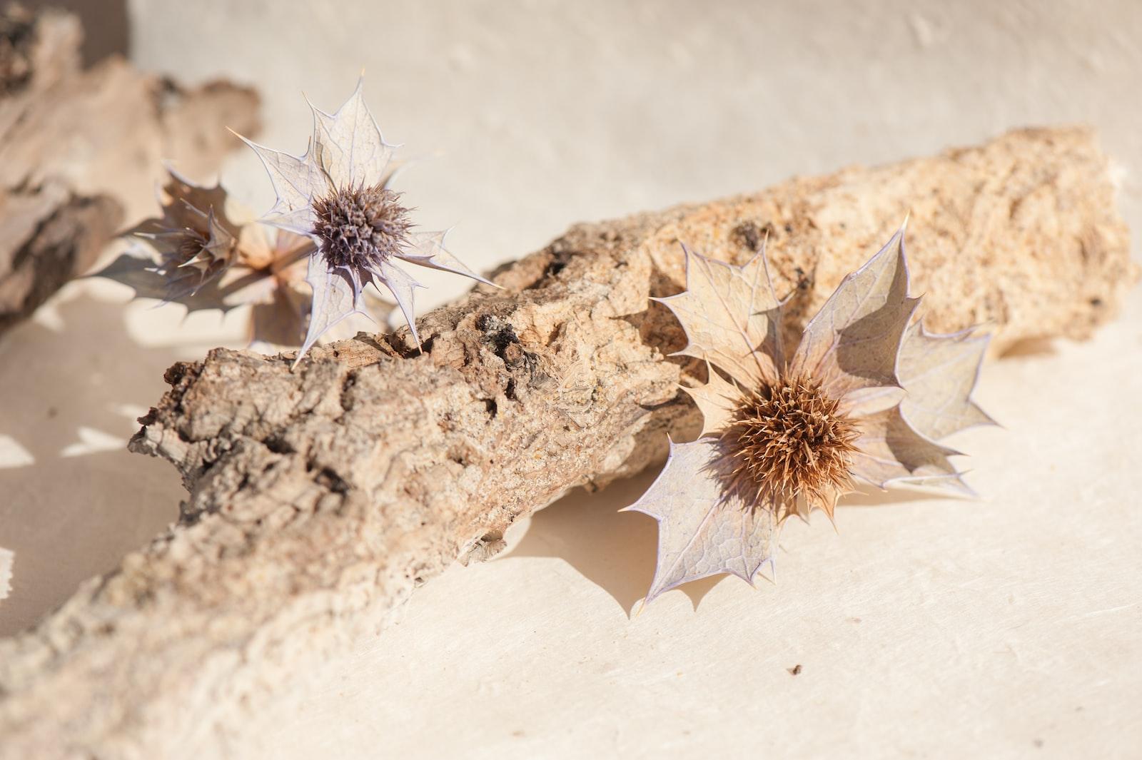 "Nikon D700 sample photo. ""Brown plant on brown"" photography"